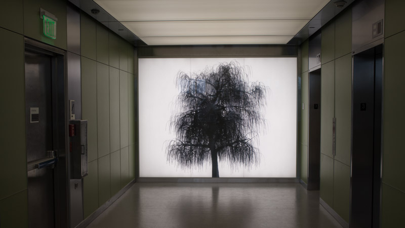 A photograph of ARBOR, an installation by Adam Frank.