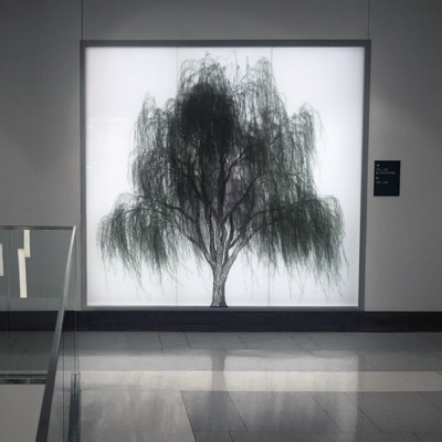 An image of ARBOR, an installation by Adam Frank.